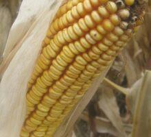 Ear of Corn Sticker