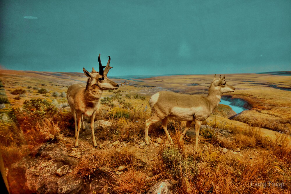 Pronghorn: The Last New World Antelope by Larry Trupp