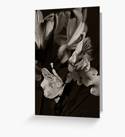 Alstrumeria (after Edward Steichen) Greeting Card