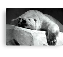 White nap. Canvas Print