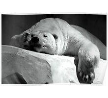 White nap. Poster