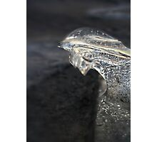 Ice crystal Photographic Print