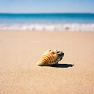Shell on the beach by Jill Ferry