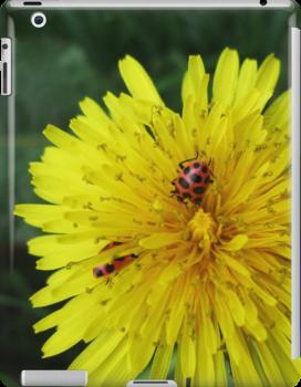 Ladybug Friends by AbigailJoy