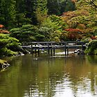 Fall in Japanese Garden, Seattle by Olga Zvereva