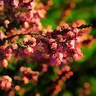 PINK FLOWERS by fedda95