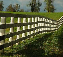 Sun Fence by Thomas Stevens