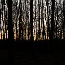 Forrest with setting sun - outline - friedwald by claudiagannon