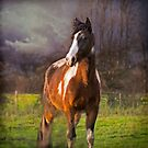 Winter Portrait of Paint Horse 'Paco Picasso' by Jay Taylor