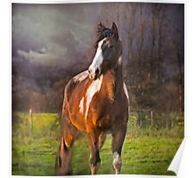 Winter Portrait of Paint Horse 'Paco Picasso' Poster