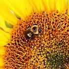 Golden Nature by AbigailJoy