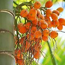Palm Seeds by tropicalsamuelv