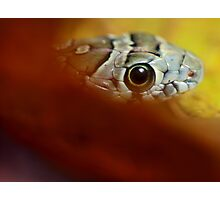 Young snake Photographic Print