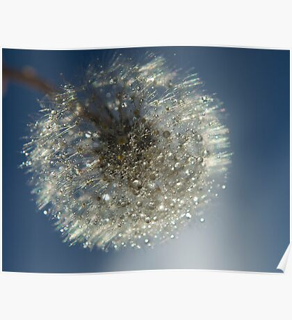 The Universe on a Dandelion  Poster