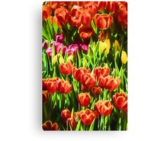 Coloured Tulips   (GO) Canvas Print
