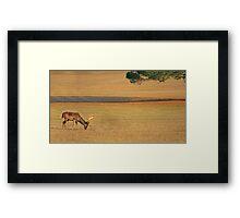 Deer on the grassland Framed Print