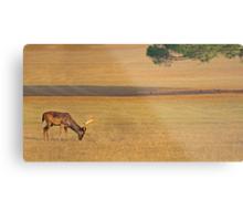 Deer on the grassland Metal Print