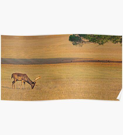 Deer on the grassland Poster