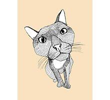 Bigface Cat Photographic Print