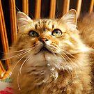 Cat n.5 by Carnisch