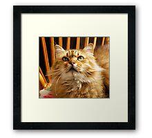 Cat n.5 Framed Print
