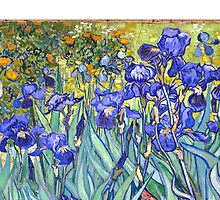 Irises by fineartgallery
