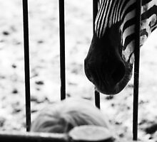 a sad zebra by kavolis
