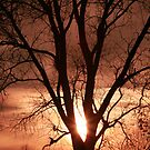 November Sunset ~ by Renee Blake