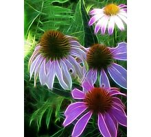 Kathie McCurdy Purple Cone Flowers Abstract Photographic Print