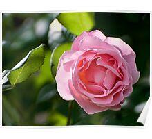 A Rose For Julie Poster