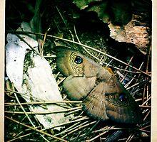 Moth by Marita