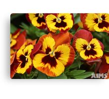 Pansy Faces Canvas Print
