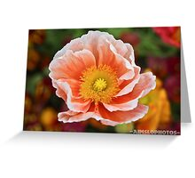 Peach Coloured Poppy  Greeting Card