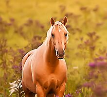 PALOMINO PAL by Randy & Kay Branham