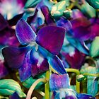 Purple and Blue Orchids by kmvartworks