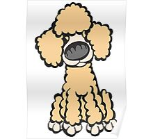 Toy Poodle (Peach) Poster