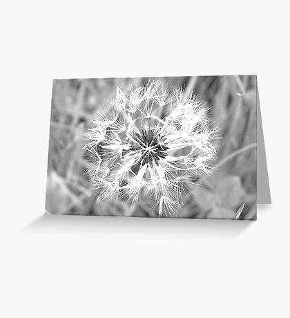 Dandelion Seedhead Greeting Card
