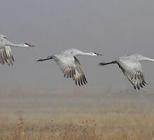 Trio of Cranes by ruth  jolly