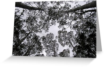 Tree tops by Michelle Ricketts