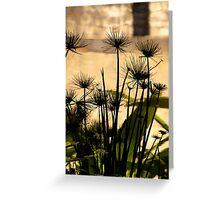 Seedhead Reflections Greeting Card