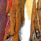 Snowgum Bark by Michelle Ricketts