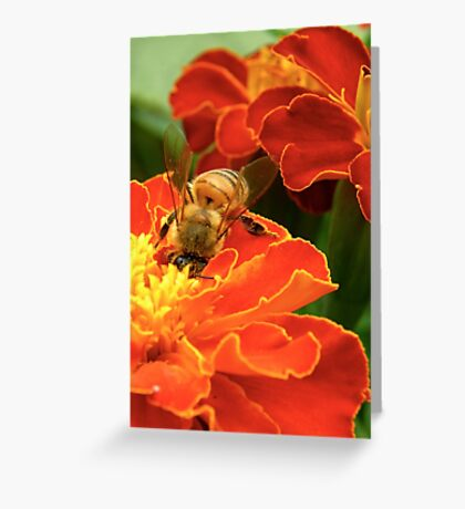 Marigold Bee Greeting Card