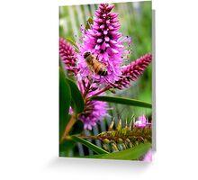 Hebe Honey Bee Greeting Card