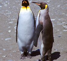 King Penguin Conversation, 'Oh no! I don't think so.' by Carole-Anne