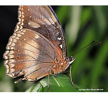 Macro butterfly 002 Photographic Print