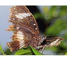 Macro butterly 005 Photographic Print