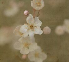 Paper Plum Blossom by Kerry McQuaid