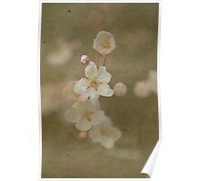 Paper Plum Blossom Poster