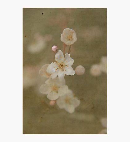 Paper Plum Blossom Photographic Print