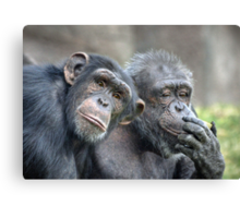 Couple Chimps Canvas Print